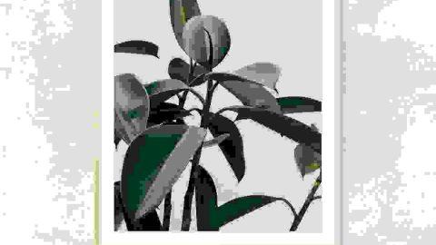 Green leaves photo frame